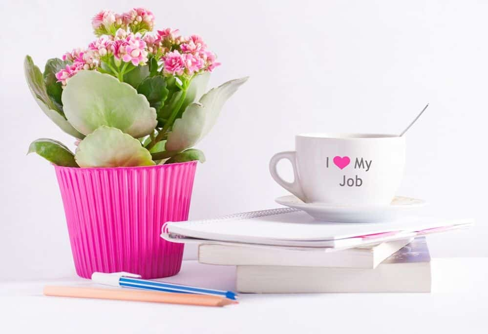 plant and other desk accessories of virtual assistant